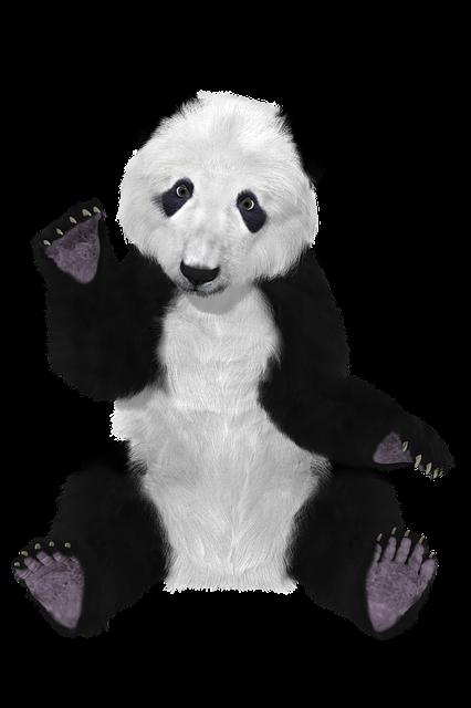 Panda Chine Ours 183 Image Gratuite Sur Pixabay