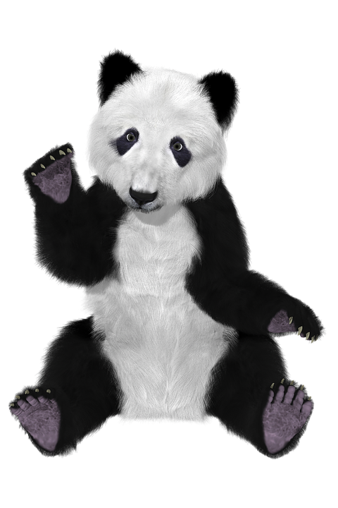 relax escort oso bailarín