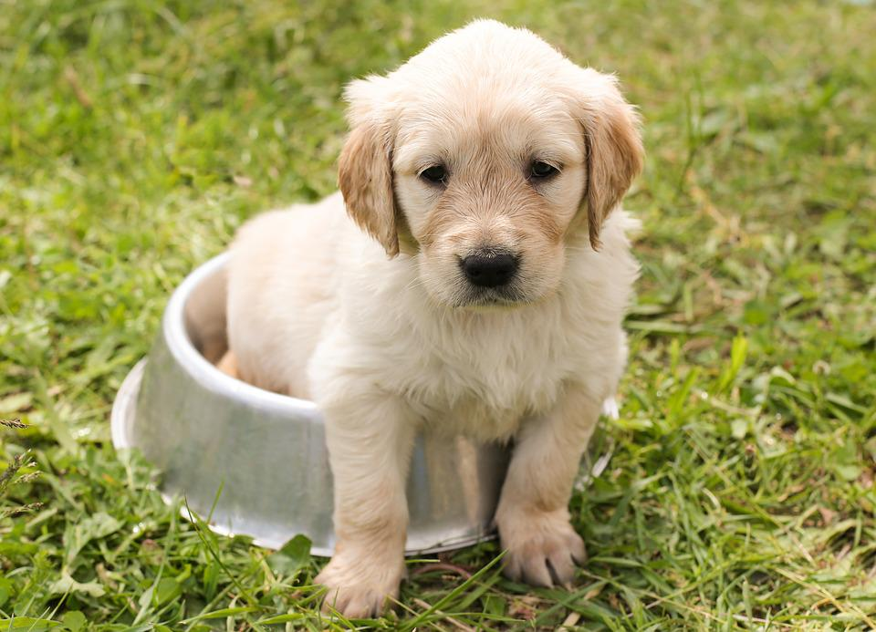 Tips For Growing A Puppy
