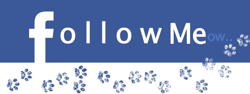 Facebook, Follow, Internet, Media