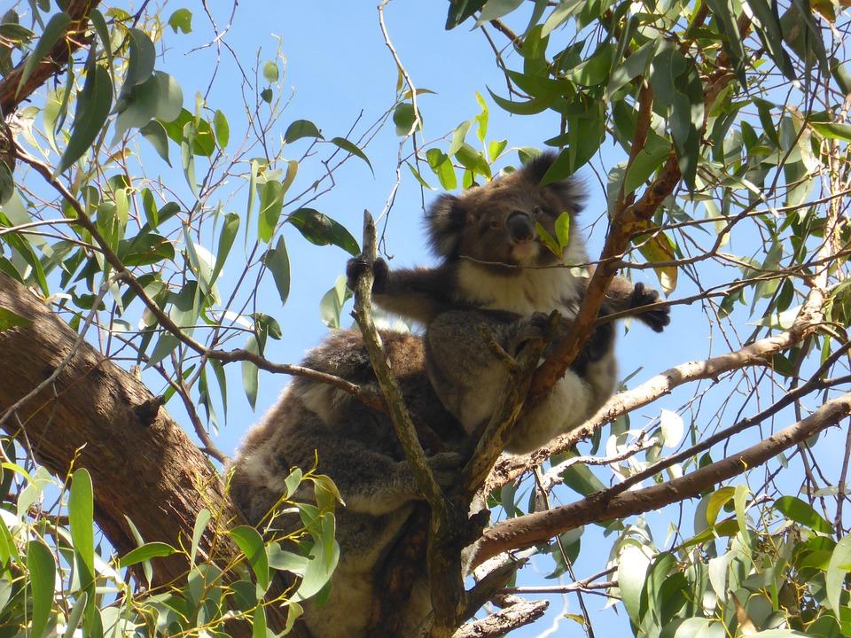 Gumtree australia login