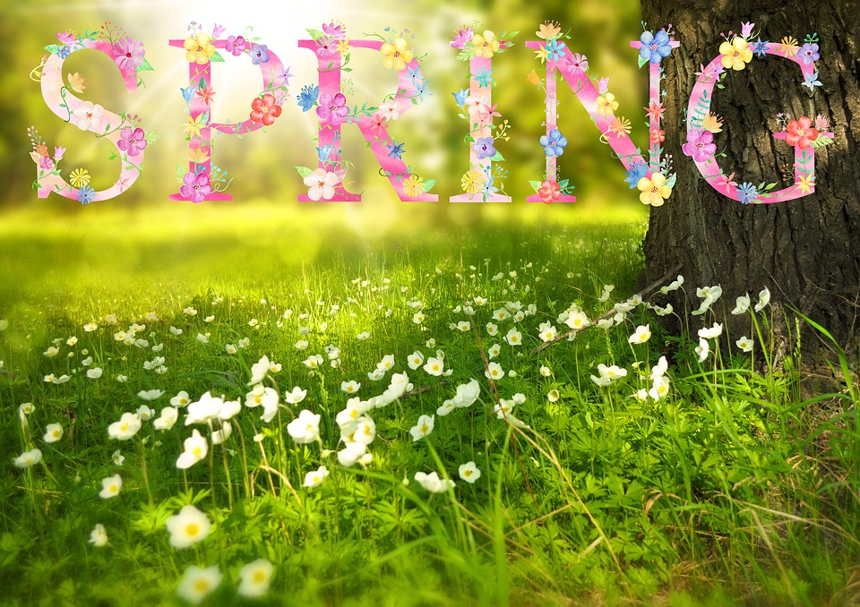 Spring flowers sun free image on pixabay spring flowers sun sunny field blossom season mightylinksfo Gallery