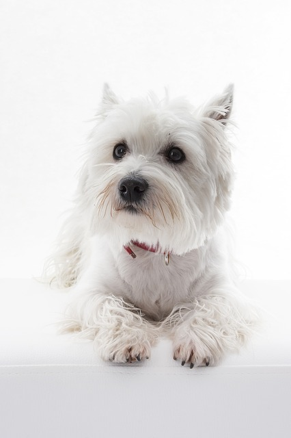 Dog Breeds With Hair