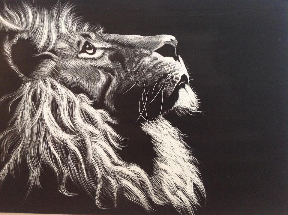 lion black and white etching free image on pixabay