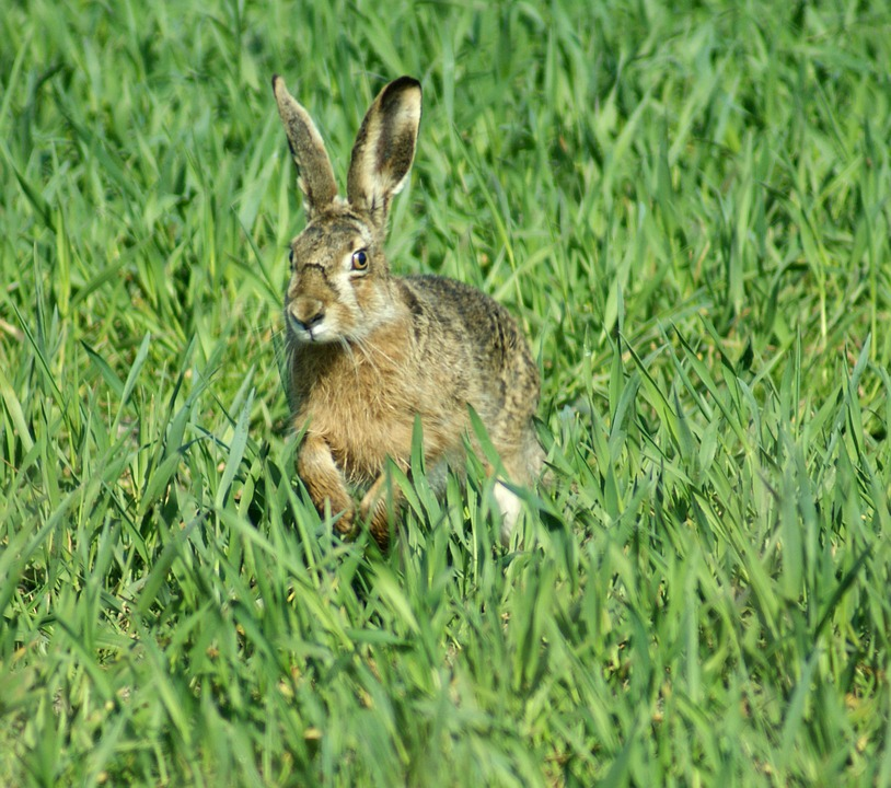 Free Photo Hare Easter Spring Animals Free Image On