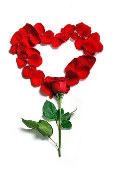 Роза, Лепестки, Цветочные, Цветы, Цветок
