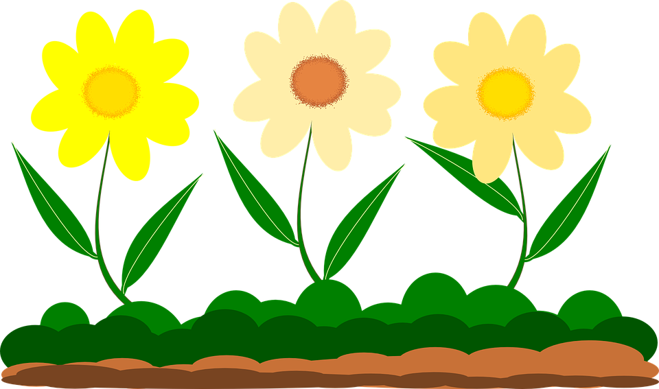 Perfect Yellow Flower, Vector Image, Garden