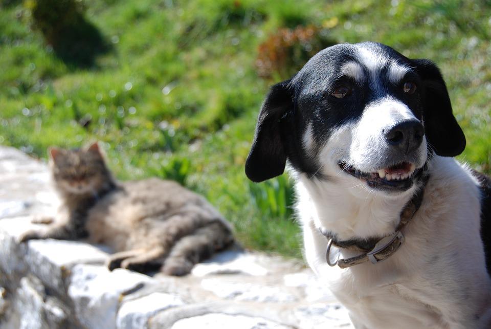 Hund Katt Fiendskap Som Och Gratis Foto På Pixabay
