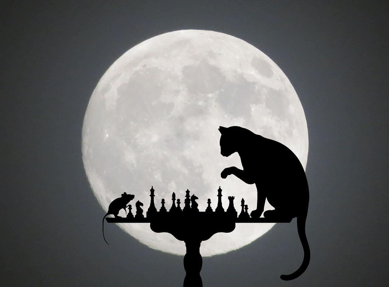 кошки под луной картинки янтарь особенно