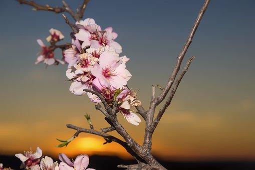 Mein Bild der Woche - Mandelblüte auf Mallorca