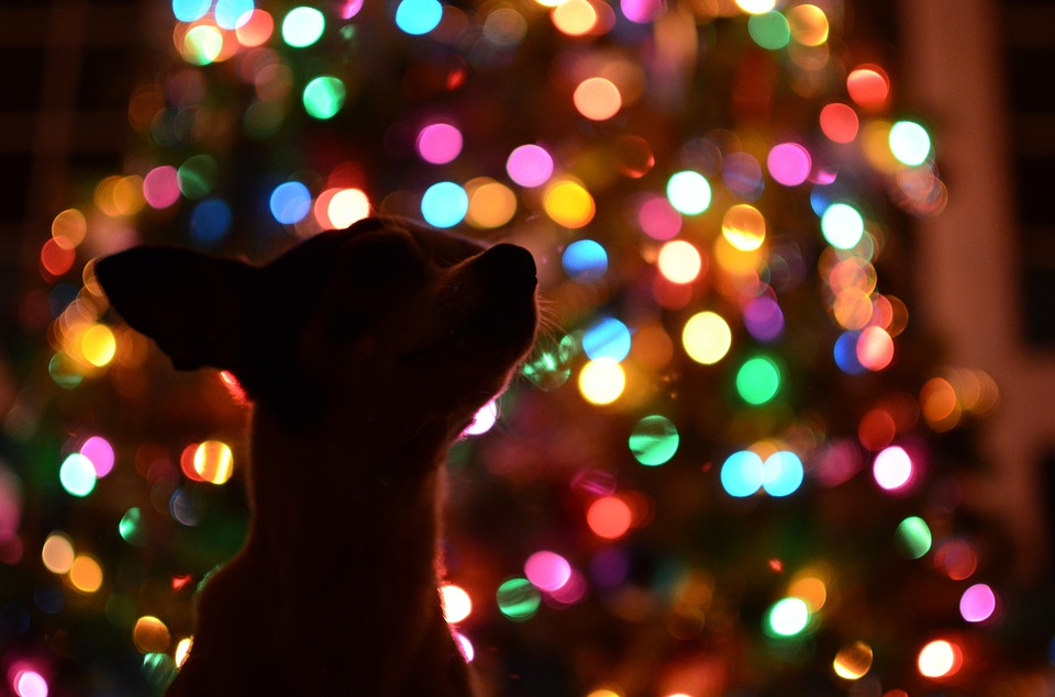 dog christmas tree dark lights colorful silhouette - Dog Christmas Lights