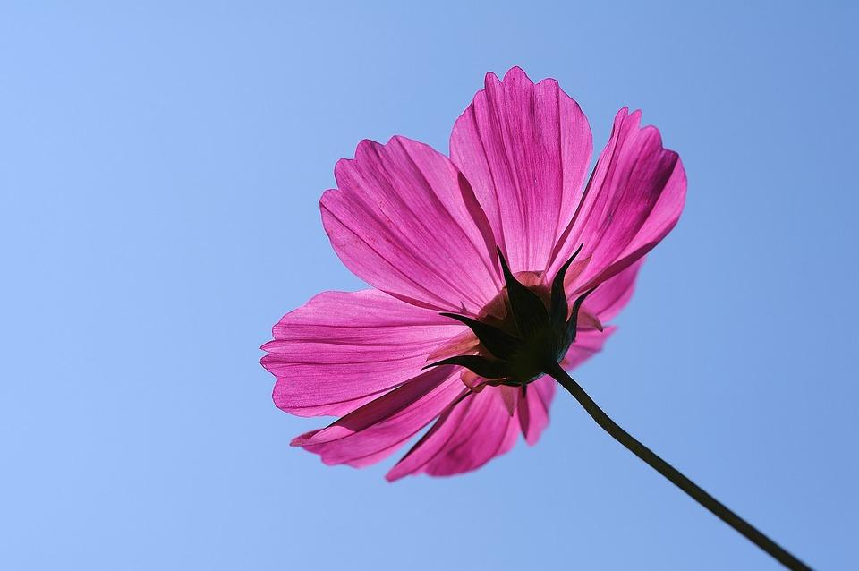 «Лето будет»: вГидрометцентре столичному региону обещали температуру в«розовых» тонах