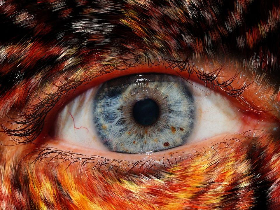 Close Eyes Free Pictures On Pixabay - 24 detailed close ups of animal eyes