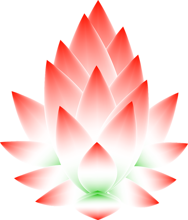 free illustration  lotus  flower  blossom  abstract - free image on pixabay