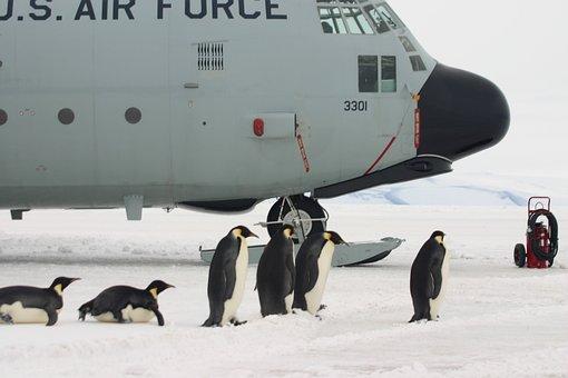 Plane, Penguins, Boarding, Antarctica