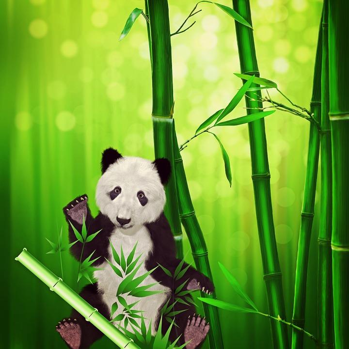 Pandabar Panda Tier Kostenloses Bild Auf Pixabay