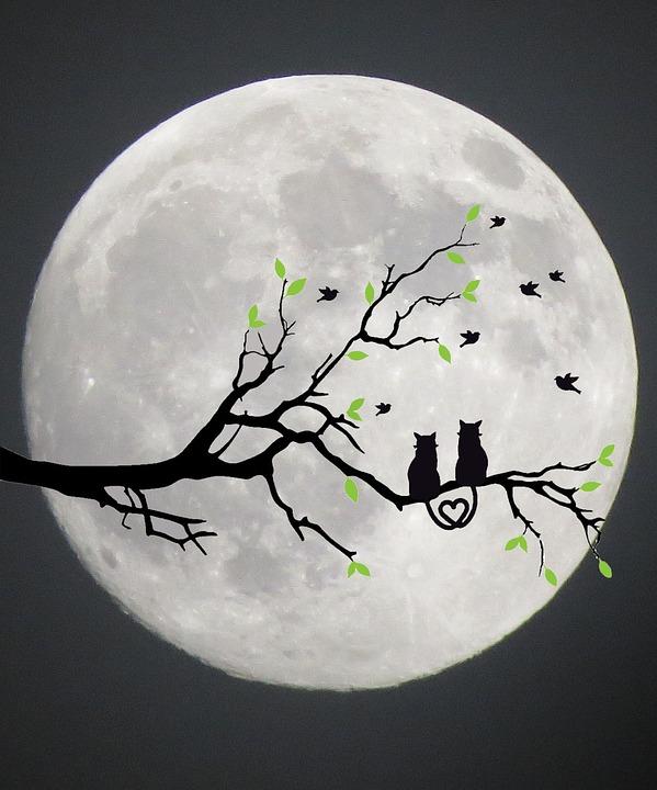Chats Lune Silhouette Gris - Image gratuite sur Pixabay