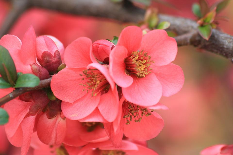 Бесплатная фотография: Весенние Цветы, Розовый, Цвет ...