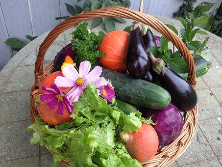 Cosecha, Verduras, Alimentos, Naturaleza