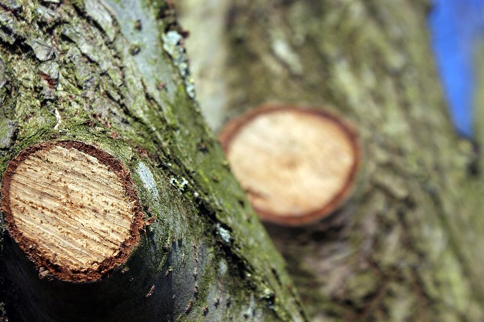 Baumschnittstellen