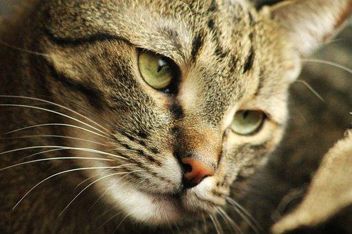 jihoafrický černý kočička videaeben porno web