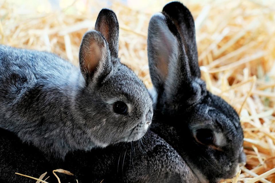 Rabbit Child Doe - Free photo on Pixabay fa30fef01