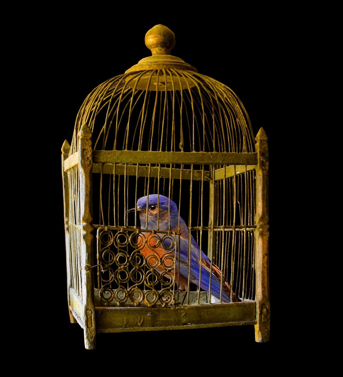 Сонник Посадить птицу в клетку. К чему снится Посадить птицу в