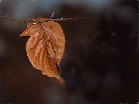 Resultado de imagen para hojas verdaderas