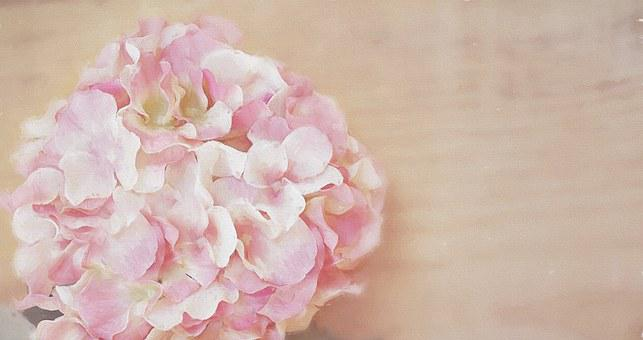 Flower painting images pixabay download free pictures painting flower blossom bloom pink mightylinksfo
