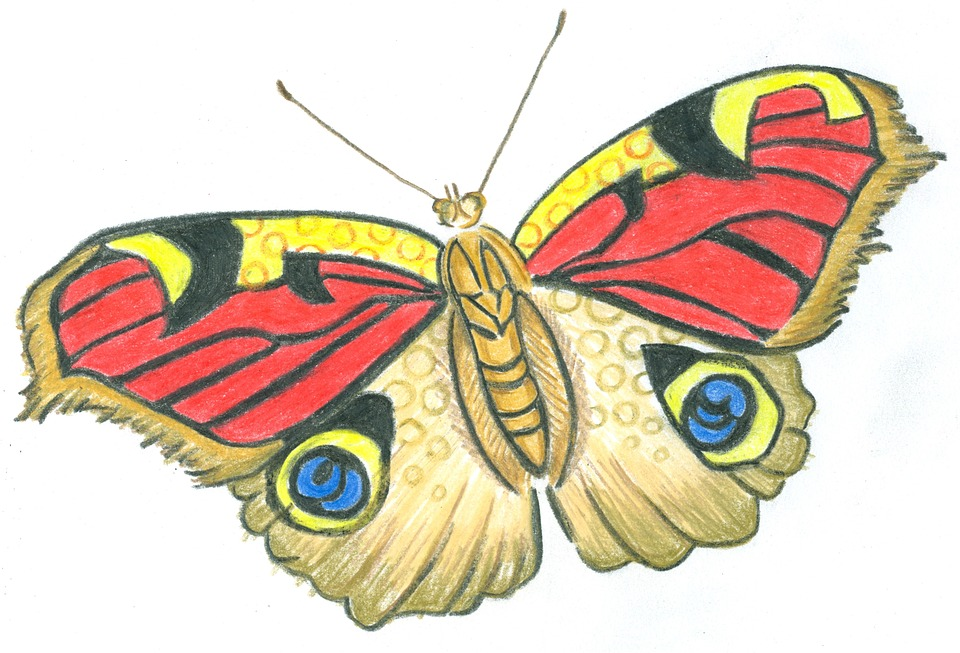 butterfly flight wings 183 free image on pixabay