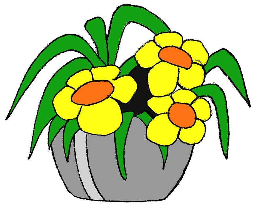 Садовые цветы из семян: выращивание рассады