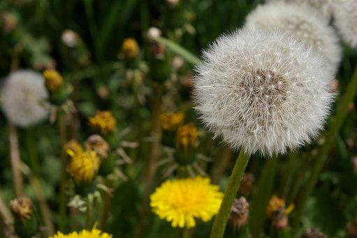 草, 雑草, 植物, 自然, 緑, 花, ハーブ, リラックス, 環境, 日照