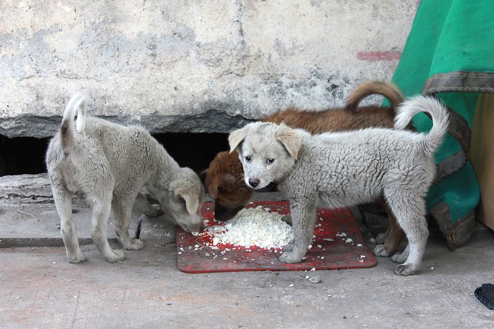 O Vagabundo, Filhote De Cachorro, Patético, Rua