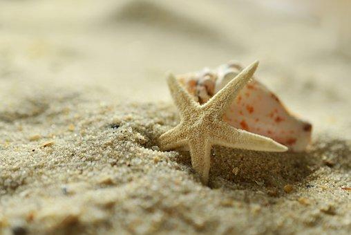 砂, ヒトデ, シェル, ビーチ, 海の, 装飾, 漂流物, 休日, 砂浜