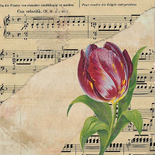 tulip background music sheet  u00b7 free image on pixabay
