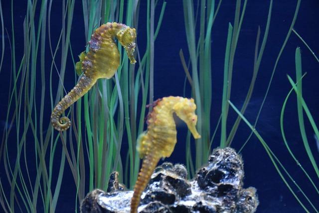 Free Photo Hippocampus Aquarium Qu 233 Bec Free Image On