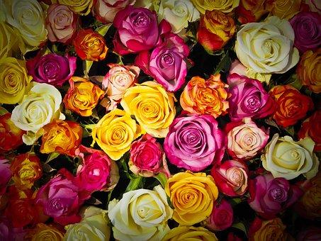 バラ, バラの花束, 花束, 花, 白, ピンク, オレンジ色のバラ, 赤