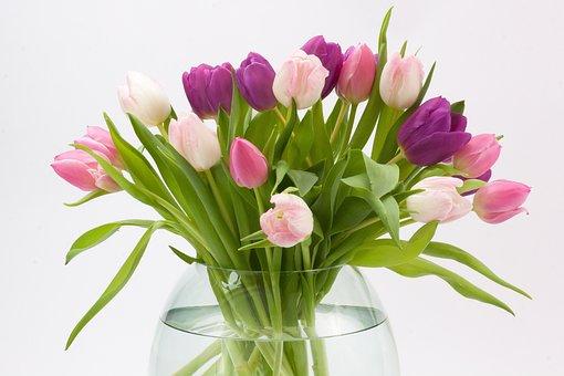 Tulip, Tulip Bouquet, Spring Flower