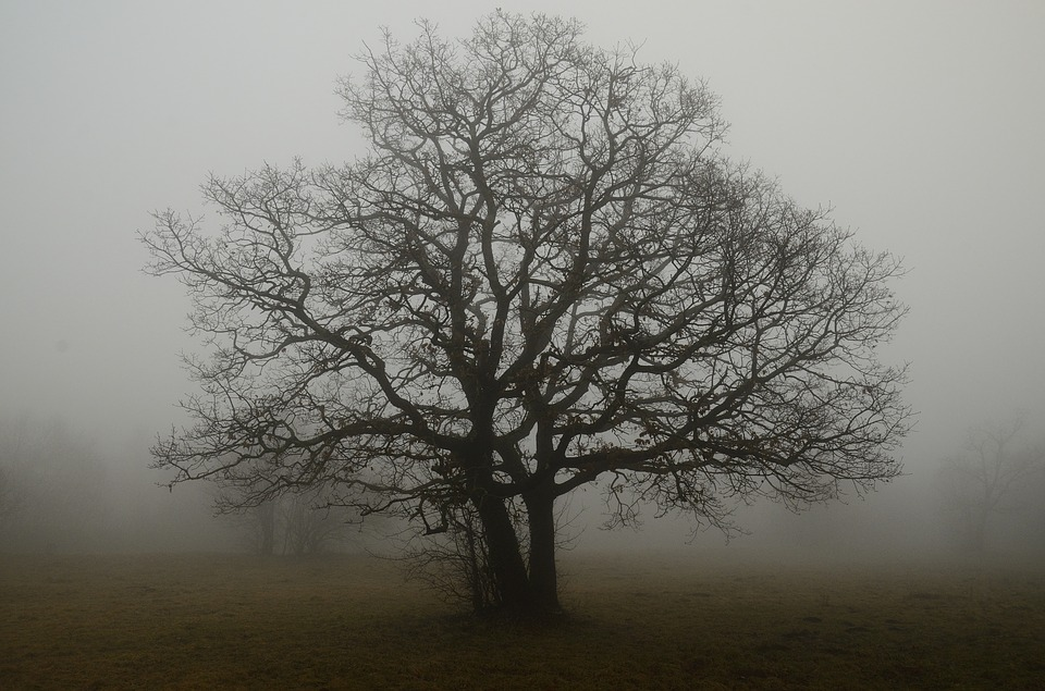 free photo tree branches fog solitude free image on