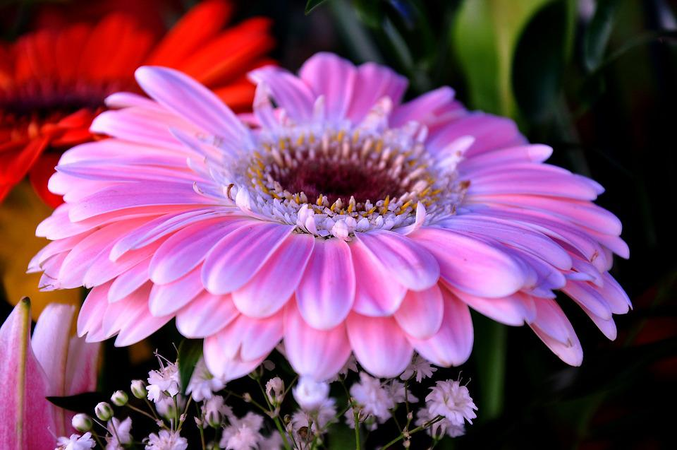 gerbera flower bouquet cut free photo on pixabay