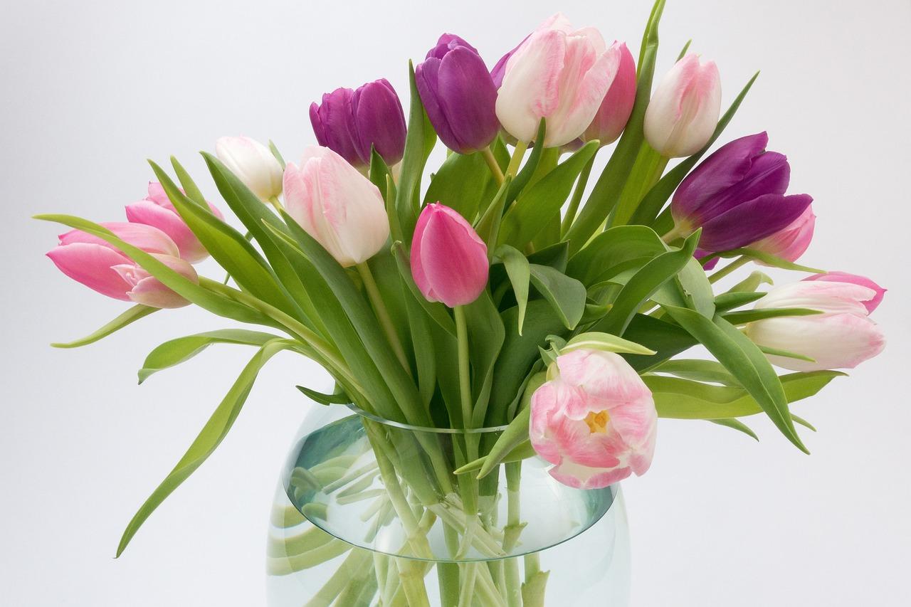 Новая голландия новосибирск цветы