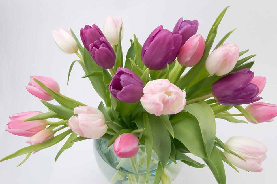 Tulip Bouquet Spring Flower Free Photo On Pixabay
