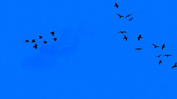 Elielschi Pixabay