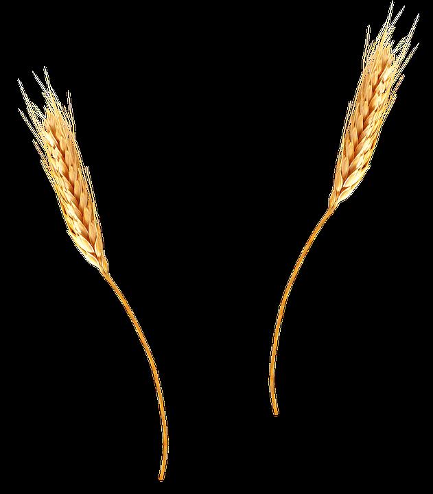 barley png - photo #13