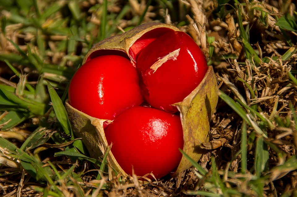 Fruit tamarin - photo#47