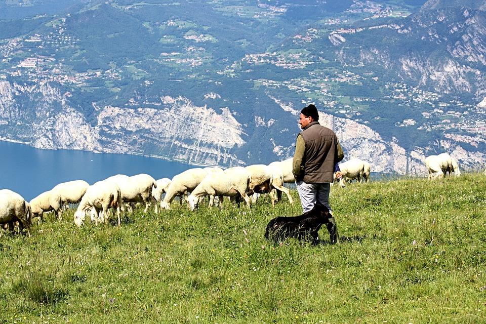 Αποτέλεσμα εικόνας για βοσκος με προβατα