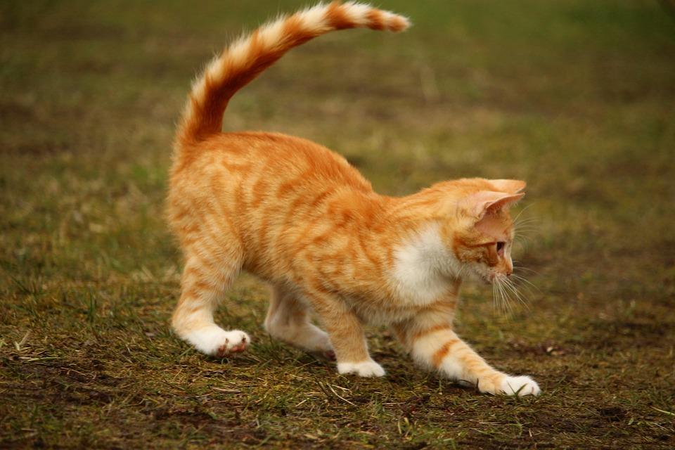Kot Red Cat Kotek Czerwony Darmowe Zdjęcie Na Pixabay