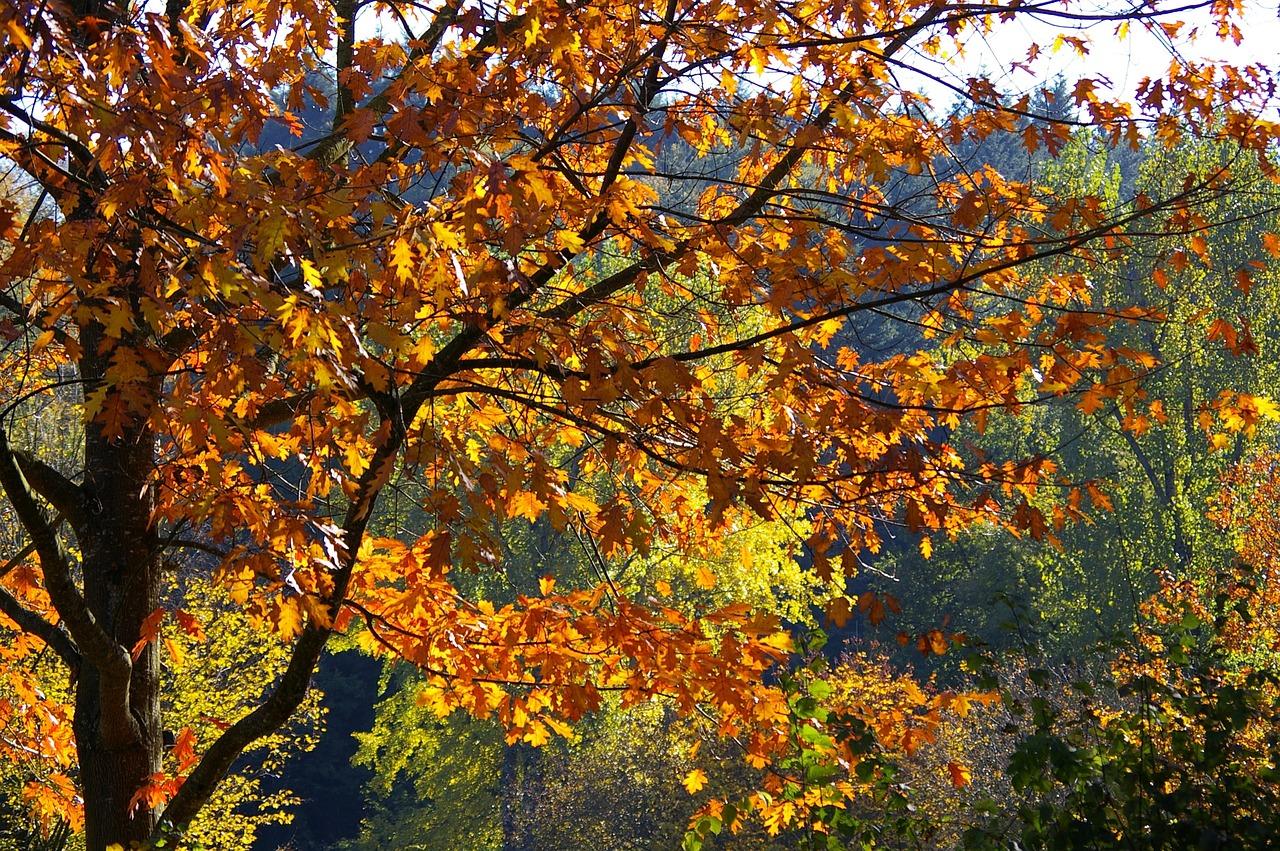 осенние листья и деревья фото своих