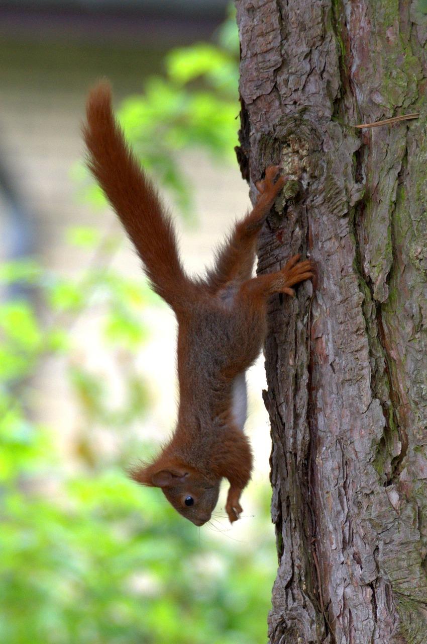 сначала белки на деревьях фото предложил подраться друг