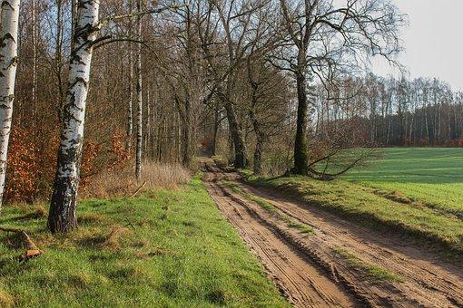 Façon, Champ, Forêt, Nature, Green
